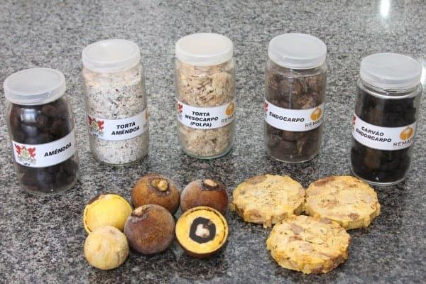 Macaúba pode ser alternativa para bioquerosene e solução para pastagens degradadas no Brasil