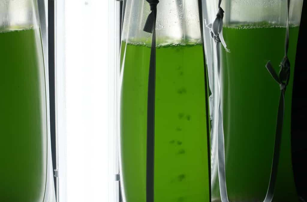 Cearenses desenvolvem pesquisa que utiliza microalga para produção de biodiesel