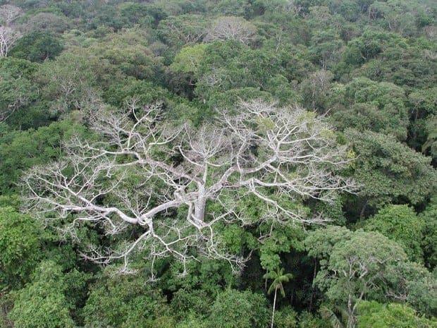 Relatório da ONU prevê `catástrofe ambiental` no mundo em 2050