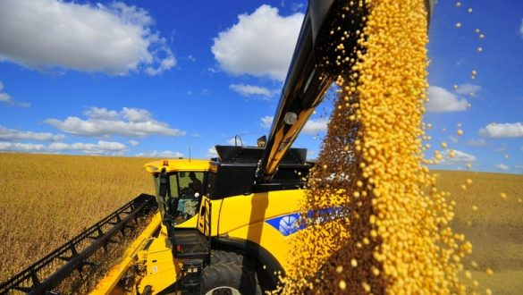 Colheita de soja do Brasil