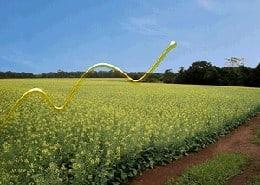 Produção de biodiesel cresce em julho