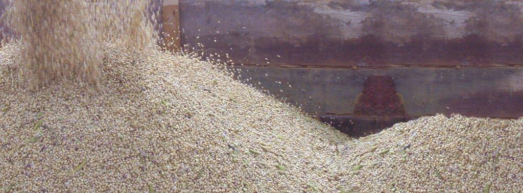Vendas de farelo de soja ultrapassam outubro do ano passado