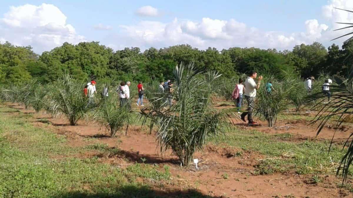Sistema Agroflorestal para gerar alimentos, energia e renda no Nordeste
