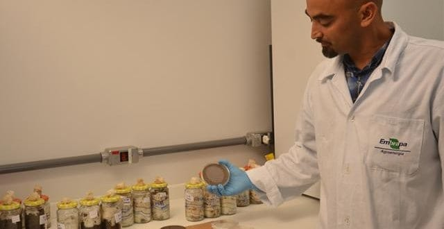 Pesquisa usa cogumelos para integrar biocombustíveis e alimentação
