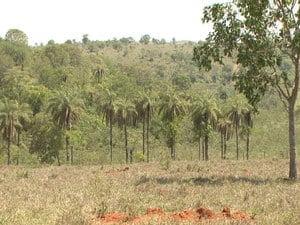 Plantações têm recuperado áreas desmatadas (Foto: TV Integração/Reprodução)