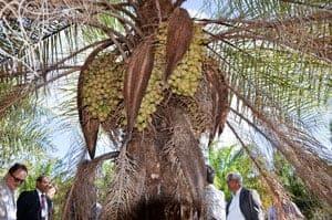 Programa agroflorestal para energia e alimentos será implantado no Nordeste