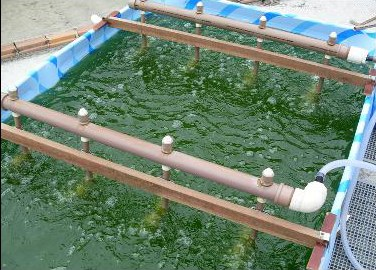 Projeto quer produzir de biodiesel a partir de microalgas