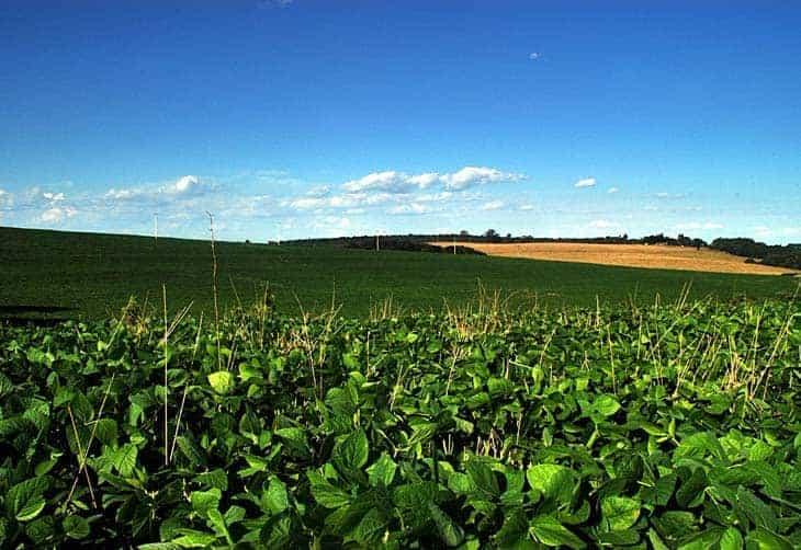 Nova mistura de biodiesel ao óleo diesel deve impulsionar produção de soja
