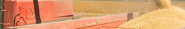 2013 será o ano dos recordes para o Agronegócio Soja