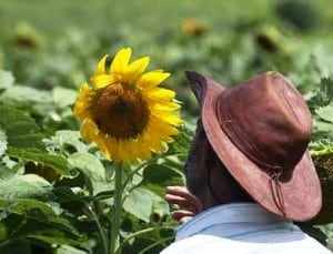 Agricultura familiar fatura R$ 2 bilhões com vendas para produção de biodiesel