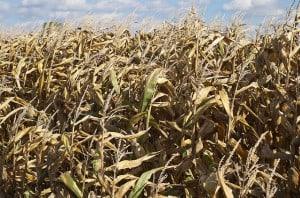 2º Fórum Nacional de Logística de Biocombustível traz novidades do mercado