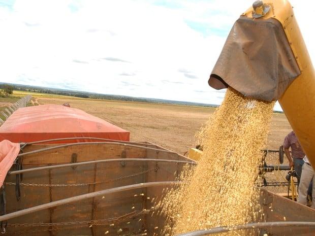 Soja colhida no Tocantins é levada para os portos de Salvador e do Maranhão para depois ser exportada (Foto: Madson Maranhão/Seagro)