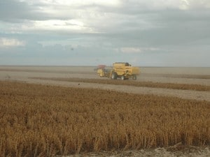 Apesar de possuir potencial agrícola, soja não é beneficiada no Tocantins (Foto: Madson Maranhão/Seagro)