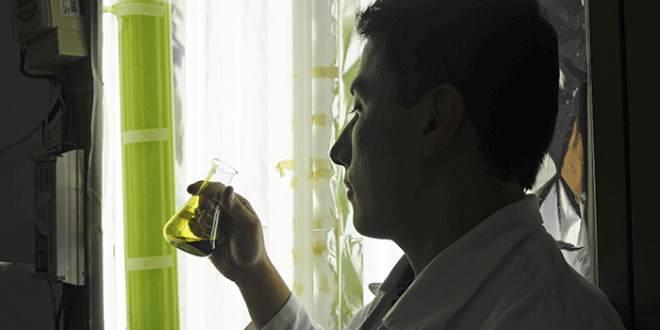 Um biodiesel de microalga