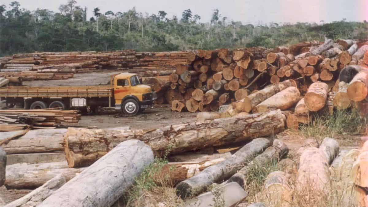 Danos ao meio ambiente custam 7,3 trilhões de dólares anuais para economia mundial