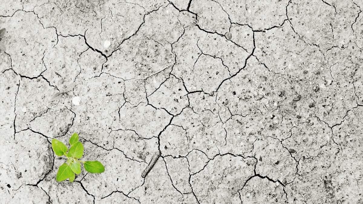 Humanidade estoura limite de 1,5ºC em 22 anos, diz estudo
