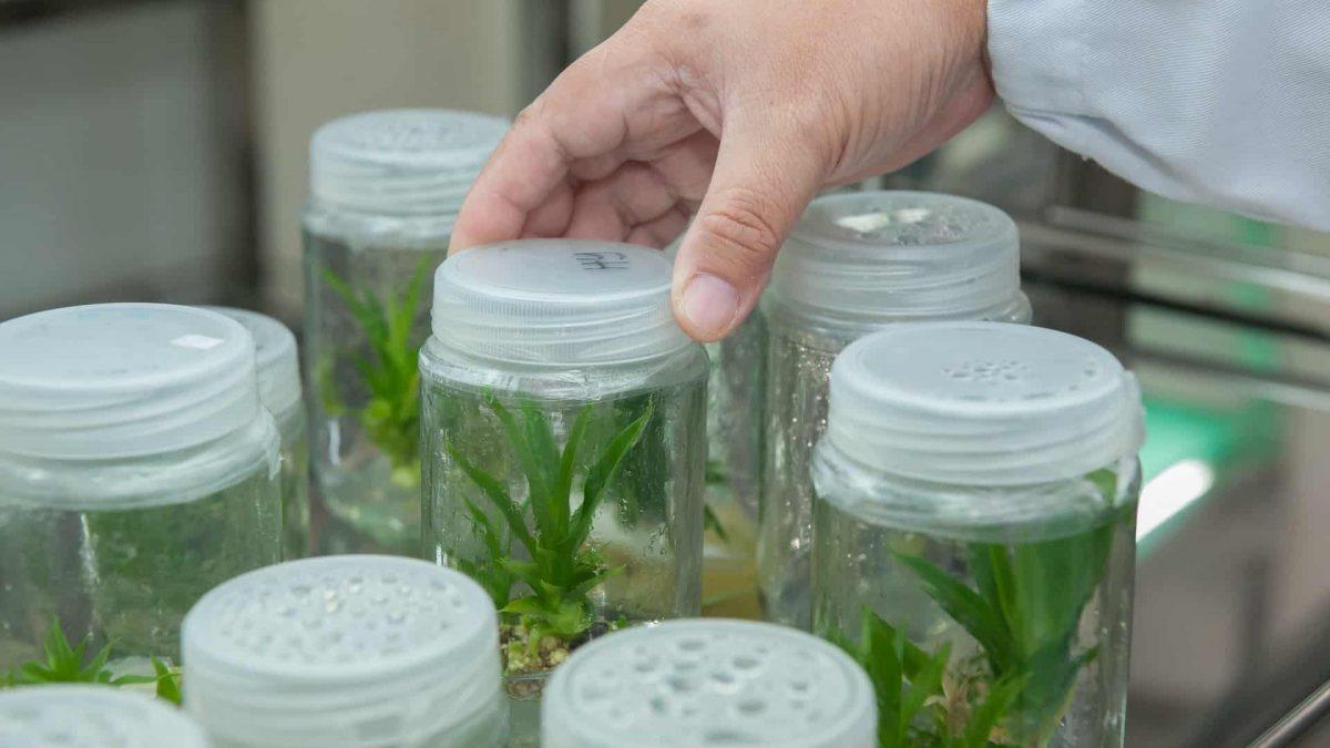 Semanas de Inovação Suécia-Brasil discute a colaboração em projetos de Bioeconomia