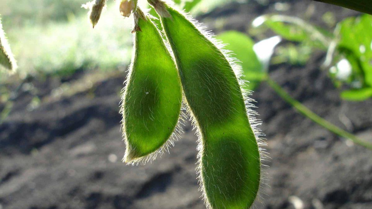 Fundo verde para financiar produção de soja sustentável no Brasil é lançado em Londres