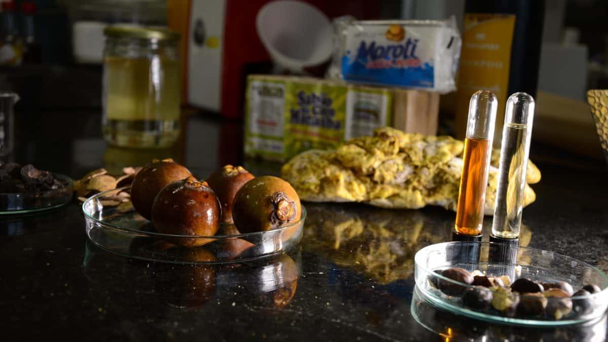 Brasil e Paraguai fazem parceria para extrair óleo de macaúba com alta qualidade