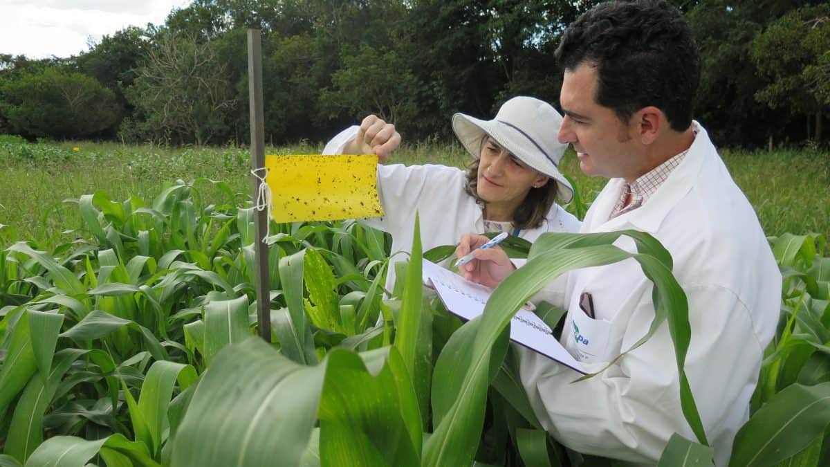 Pesquisa vai usar gás carbônico como matéria-prima de agroquímicos de liberação controlada