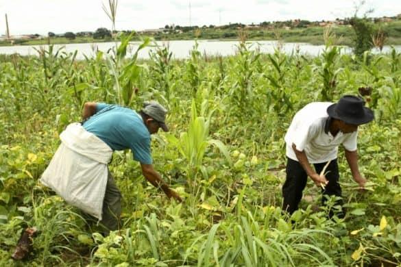 Agricultura será uma das áreas afetadas por conta do aquecimento global (Foto: Tatiana Fortes)
