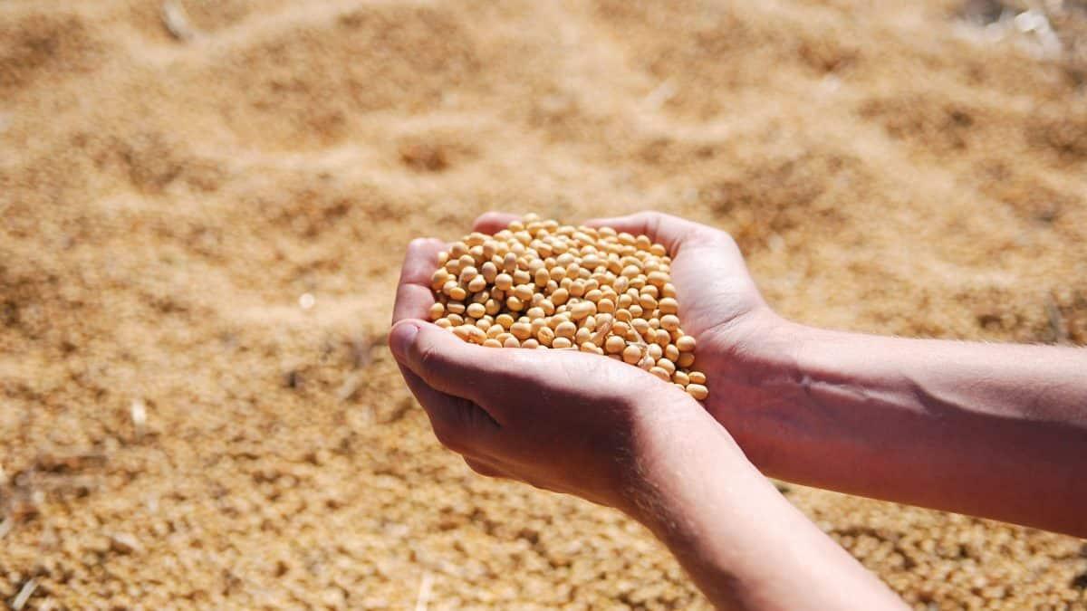Clipping 2ª edição: Produtor de soja do Brasil aproveita e tira atraso nas vendas