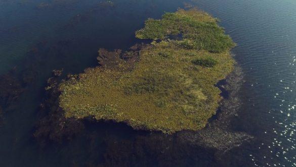 Ilha de algas no Rio Paraná; planta prejudica funcionamento de usina — Foto: Reprodução/TV TEM