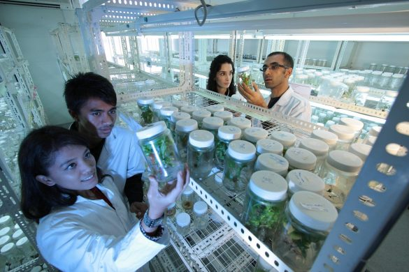 biotecnologia, revolução biotecnológica