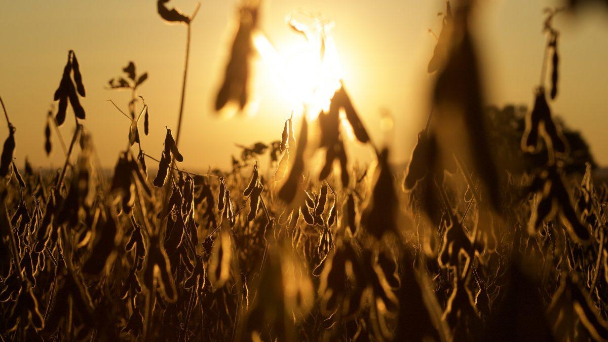 Indústria compradora de soja está preocupada com abastecimento do grão no segundo semestre