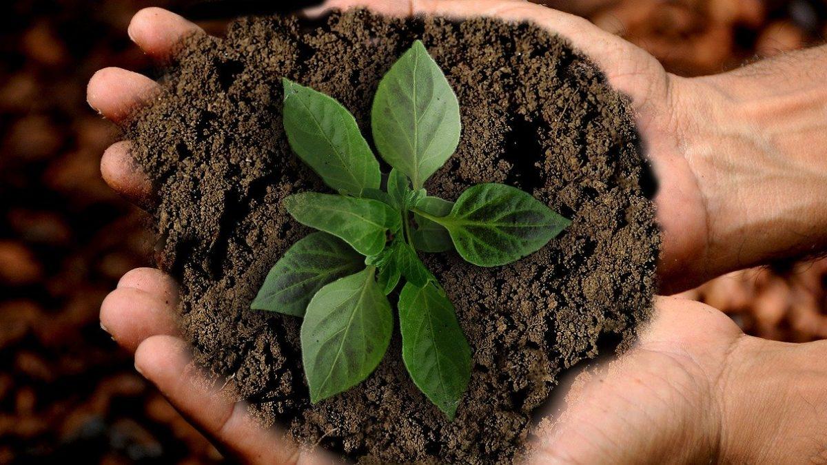 Mapa e CBI lançam Plano de Investimento para Agricultura Sustentável