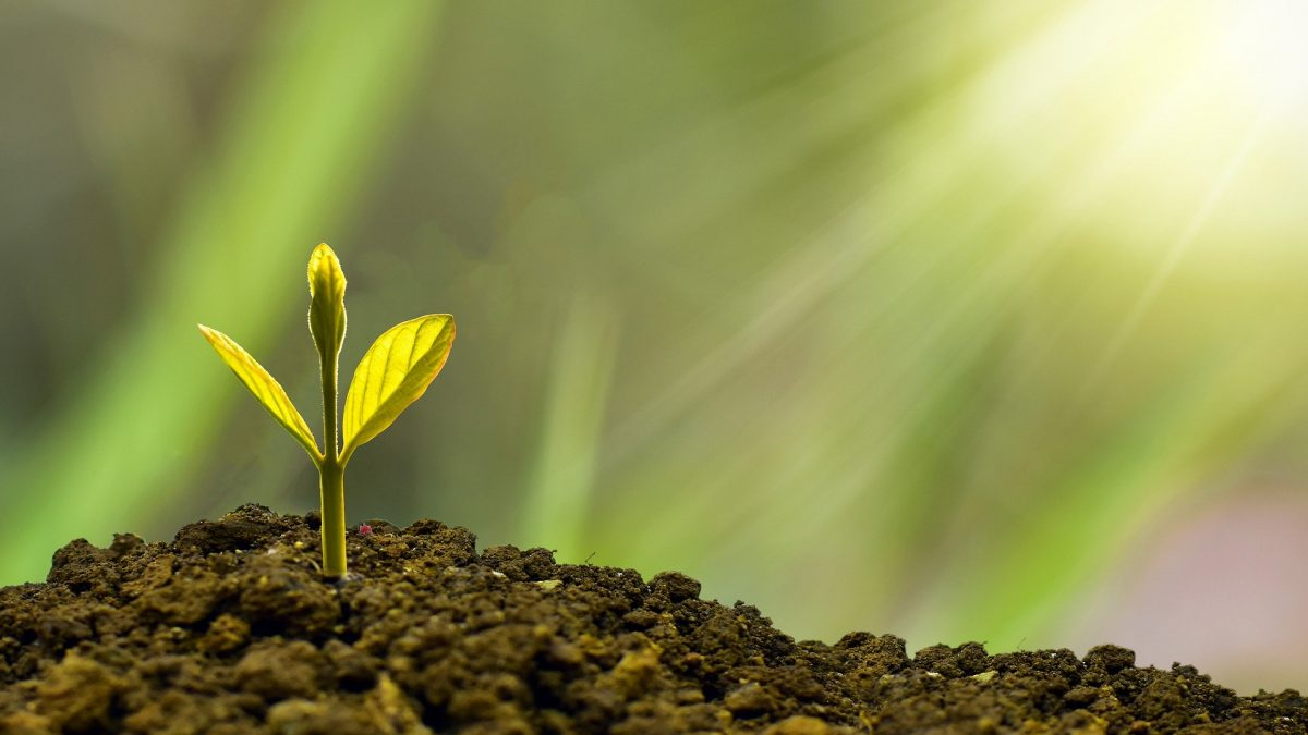 Clipping 1ª edição: Plataforma Biofuturo cobra apoio a energias renováveis
