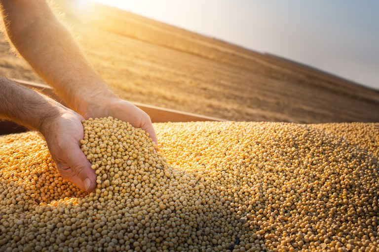 Clipping 2ª edição: Safra de grãos deve atingir 271,7 milhões de toneladas, prevê Conab