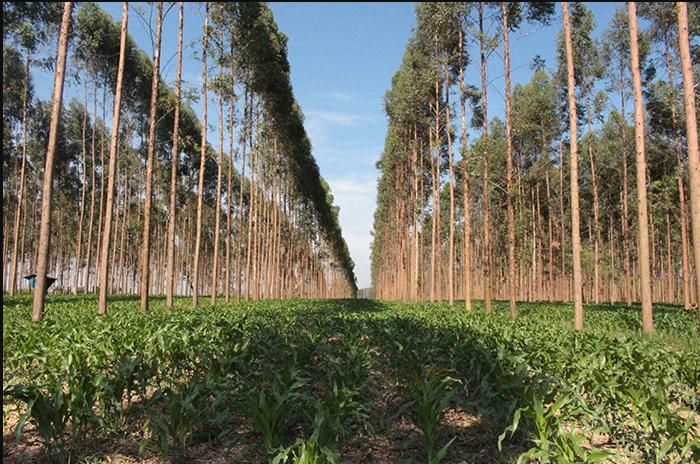 Ponte Inovação: Tecnologias poupa-terra preservaram mais de 70 milhões de hectares em áreas plantadas com soja no Brasil