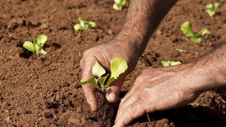 Clipping Ubrabio 1ª edição: Boletim com cenários e perspectivas para agricultura familiar é lançado nesta segunda-feira