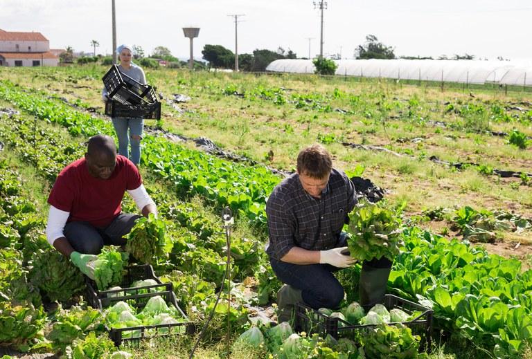 Clipping 1ª edição: Mapa prepara novo cadastro nacional para registro de agricultores familiares